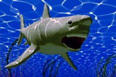 the white big shark jaws (3D rendering)